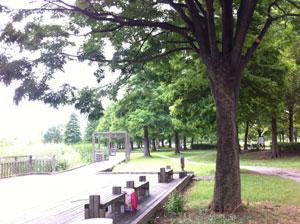 toneri_bench.jpg